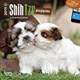 BT Shih Tzu Puppies 2015 Mini