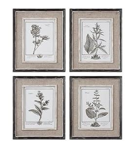 Set Of 4 Framed Gray Botanical Flower Study Prints Wall