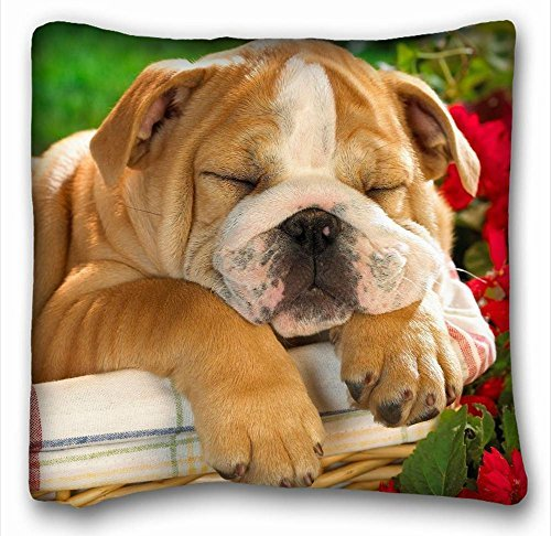 Decorative Square Throw Pillow Case Animals english bulldog puppy s crate dog 18