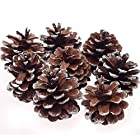 8Pcs Snow Pinecone Ornaments Christmas Tree Decorations Baubles Pine Cones