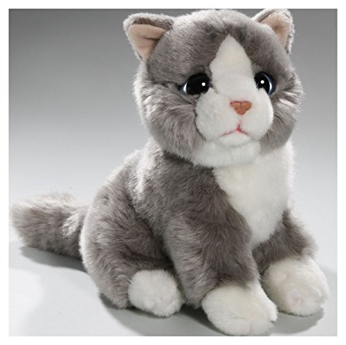 Katze sitzend grau mit großen Augen, Hauskatze