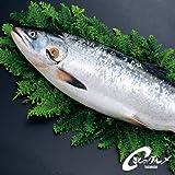 幻の鮭 「鮭児」 ケイジ 2.0kg前後 生冷凍 北海道  海鮮市場 北のグルメ