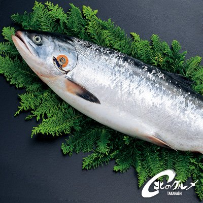 幻の「鮭児」 ケイジ 2.5kg前後 生冷凍 北海道 【 海鮮市場 北のグルメ】