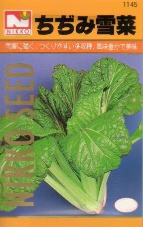 【種子】ちぢみ雪菜 [1145]