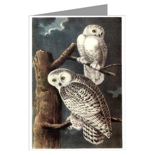 6-greeting-cards-di-john-james-audubon-s-celebrata-illustrazioni-di-uccelli-del-nord-america-motivo-