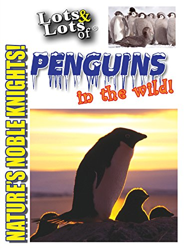 Lots & Lots of Penguins In The Wild on Amazon Prime Video UK