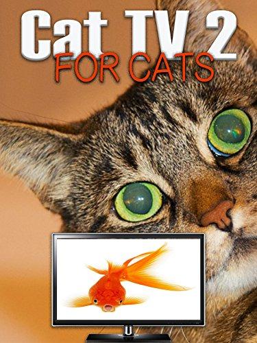 Cat TV 2