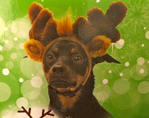 Festive Plush Reindeer Ears - Adjustable - M/L - Crazy About Pets (Crazy Dog Costumes)