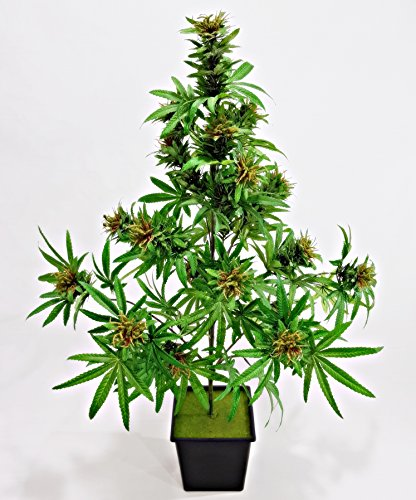 Cannabis Silk&Plastic Plant 42inc High With Beautiful Marijuana Buds, Enjoy the Beauty of the Cannabis Herb (Vaporizer Herb Kit compare prices)