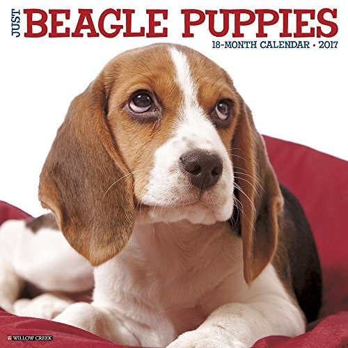 Just Beagle Puppies 2017 Wall Calendar (Dog Breed Calendars)