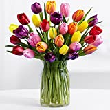30 Multi-Colored Tulips - Flowers