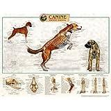 Canine Skeletal System Anatomical Chart Plastic