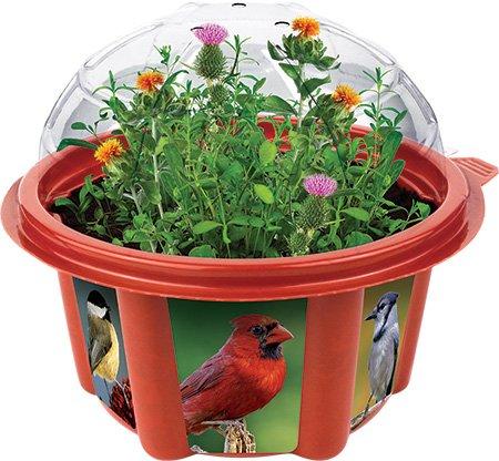 Dunecraft Wild Bird Garden Science Kit