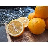 九州熊本三角産レモン、希少な国産メイヤーレモン20個