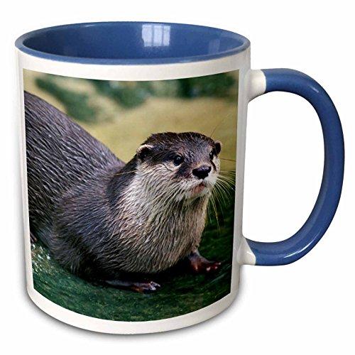 river Otter Mug<br>11 ounce Mug