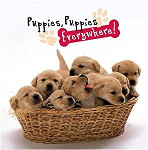 : Puppies, Puppies Everywhere! (9780824958879): Peggy Schaefer: Books