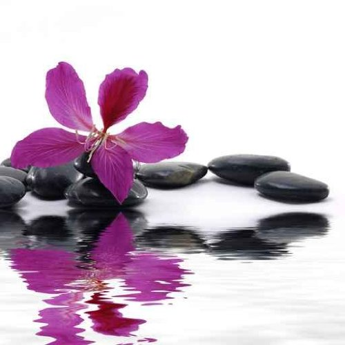 : Reflection for Black Pebbles with Beauty Red Flower - 48