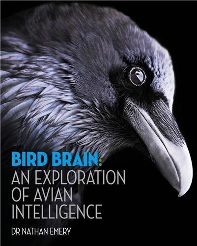 bird-brain-an-exploration-of-avian-intelligence