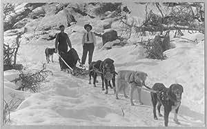 Photo: Dog sled team 2