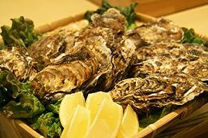 北海道・牡蠣(かき)(殻付き 生)牡蠣・厚岸西岸 仙鳳趾【牡蛎】Mサイズ30個【生食用】