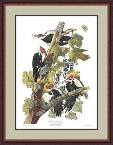 """Pileated Woodpecker"""