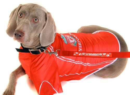 Liverpool FC Football Dog Shirt Coat 39″ X Large