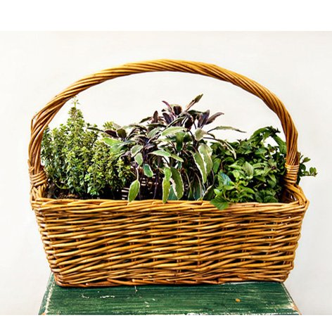 Herb Garden Gift Basket- Chefs Edible Herbs- Ships Express 2-Day