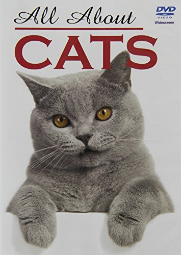 all-about-cats-dvd