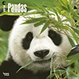 Pandas 18-Month 2014 Calendar (Multilingual Edition)