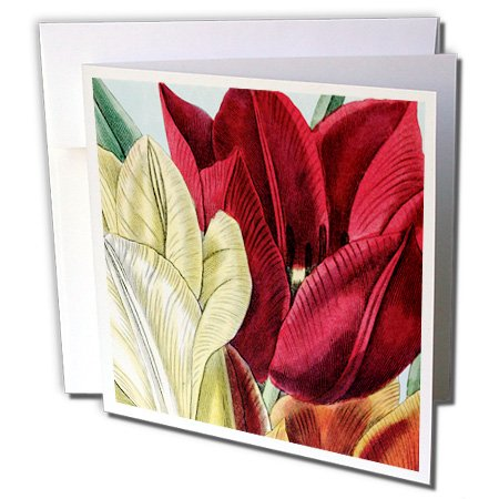 PS Vintage - Vintage Tulip Flowers - 12 Greeting Cards with envelopes (gc_203816_2)