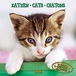 Katzen 2016: Kalender 2016