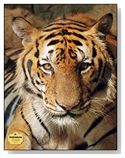 Tiger Face Notebook - The bold look of this tiger makes a dramatic cover for this blank unlined notebook.