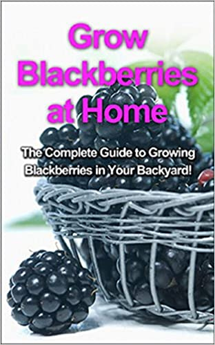 Grow Blackberries at Home