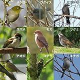 バードフィーダー:野鳥の餌台 六角屋根[お庭でバードウォッチング!]