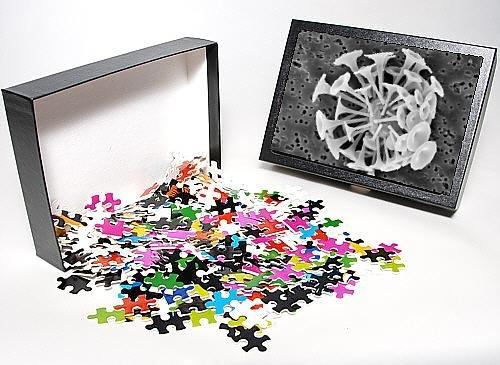 Photo Jigsaw Puzzle Of Discosphaera Tubifera, Coccolithophore From Mary Evans