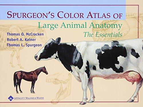 Spurgeon's Color Atlas of Large Animal Anatomy: The...