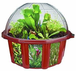 DuneCraft Dome Terrariums - Carnivorous Plants