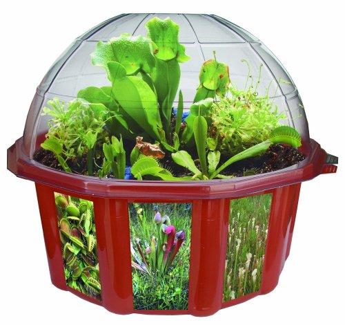 Educraft - Kit per coltivare piante carnivore