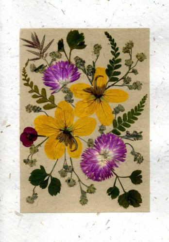 Handmade Greeting Card - Birthday, Anniversary, Easter, Mothers Day or Any Occasion Real Flower Greeting Card - Set of 5 Pressed Flower Cards