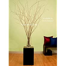 Green Floral Crafts Natural Birch Branches 3 to 7 Ft Tall + Free Gift Pack of Leaf Lilies