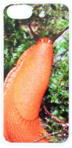 graphics-and-more-large-orange-slug-snail-mollusk-snap-on-hard-protective-case-for-apple-iphone-5-5s