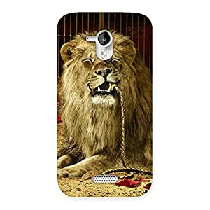 Stylish Dude Lion Multicolor Back Case Cover for Micromax Canvas HD A116
