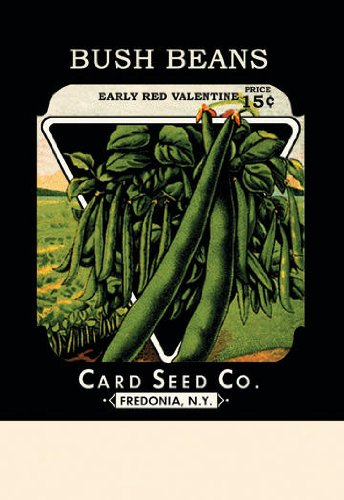 bush-beans-early-red-valentine-12x18-giclee-sur-la-toile