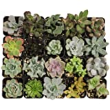 Jiimz 15 different Mixed Succulent Spring Collection
