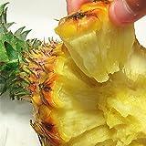 スナックパイン ボゴール 沖縄県産 お試し 3玉 (約1.2kg-2.1kg前後) 農家より直入荷で安い新鮮 ちぎって食べるユニークなパイナップル