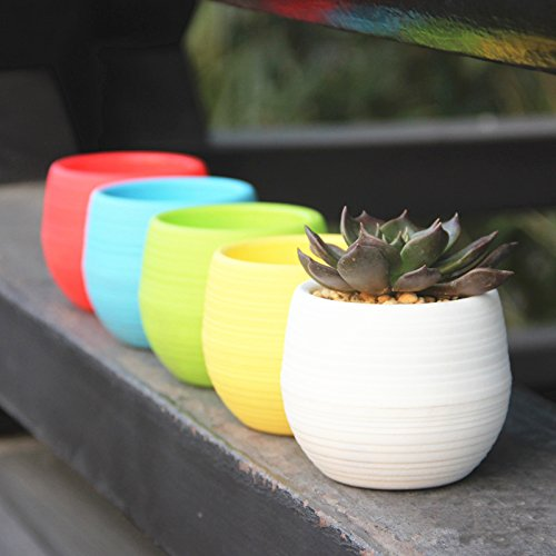 Mkono Colorful Small Plant Succulent Planter Plastic Plant Flower Pot 4 Inch, 5 Pack, Mixed Colors (5 Plastic Flower Pots compare prices)