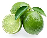 "Persian Lime Tree - Fruit Bearing Size/Branched - 8"" Pot - Citrus"