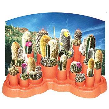 Cactus Garden Kit