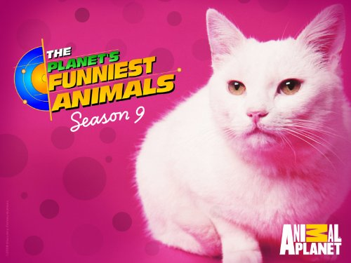 Planet's Funniest Animals Season 9