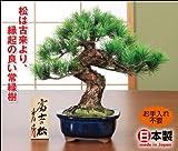 鈴木豊伯 吉祥工芸盆栽 富士の松